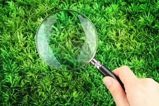 Analýza a diagnostika trávnika